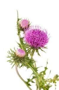 Milk Thistle for healthy skin